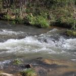 Vickery's Creek