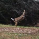 Young Deer's Creek
